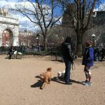 Washington square dog run