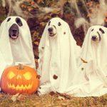 Ghost & Superheros Tours Discount Specials